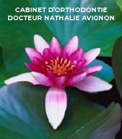 Logo Cabinet d'orthodontie Docteur Nathalie Avignon